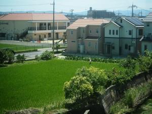 Les rizières, maintenant de plus en plus souvent au milieu des quartiers pavillonnaires.
